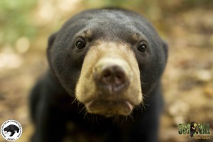 Sun Bear at BSBCC